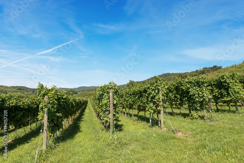 Foto op Canvas Wijngaard Italian Vineyards - Valpolicella Wine - Verona