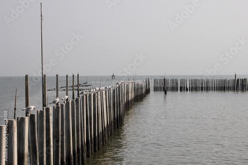 Fotobehang Pier pier with seagul