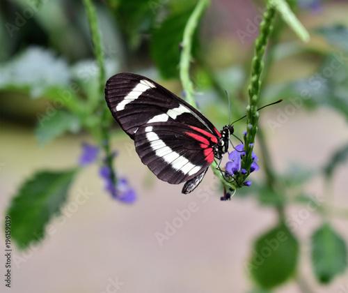Fotobehang Vlinder Schmetterling an Blütenstengel