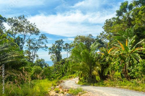Fototapeta Tropical forest, trees