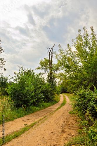 Tuinposter Weg in bos Drzewo rozłupane piorunem wśród krzaków i roślinności.