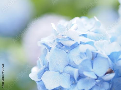 Aluminium Hydrangea 青いアジサイのマクロ撮影