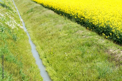 Fotobehang Geel 満開の菜の花畑と水路