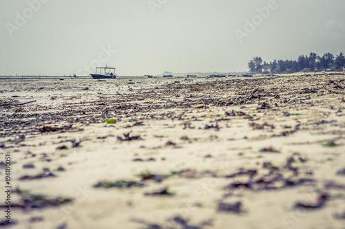 Zanzibar Spiaggia con bassa marea