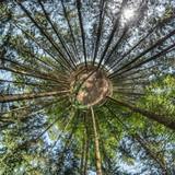 abstraktes Bild eines Waldes als Kugelpanorama