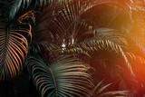 Deep dark green palm leaves pattern with bright orange sun flare effect. Creative layout, toned, horizontal - 196182868