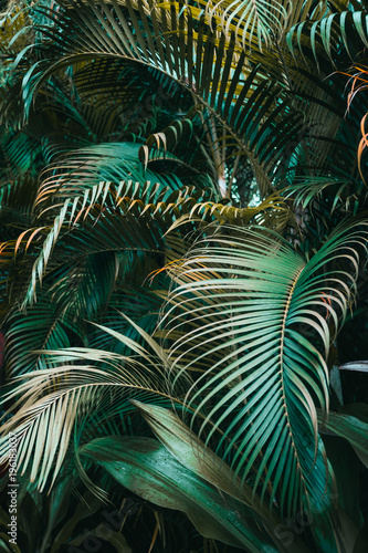 Deep dark green palm leaves pattern. Vertical, creative layout - 196183037