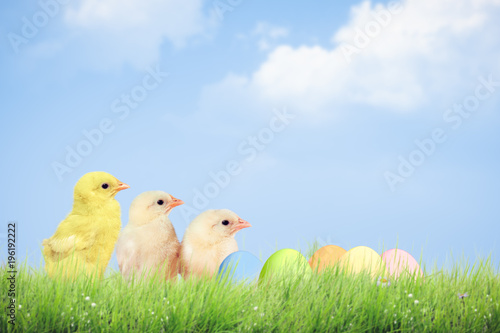 Papiers peints Herbe Easter eggs and chickens on green grass on sky background