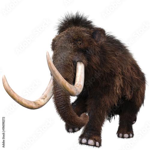 Fototapeta mamut