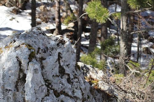 Papiers peints Gris traffic Forêt sous la neige mont serein vaucluse