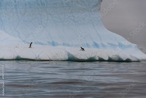 Two gentoo penguins on iceberg