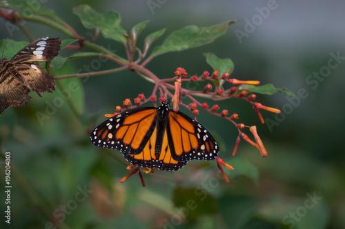 Fotobehang Vlinder Schmetterling