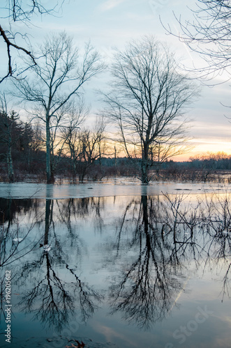 Fotobehang Herfst trees reflecting in the lake