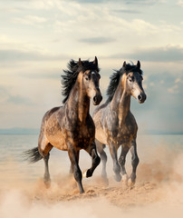 Two beautiful horses running by the sea