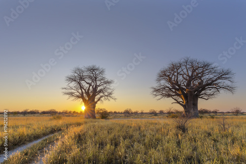 Papiers peints Baobab Sunrise at Baines Campsite