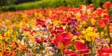 Rich flower garden - 196225223