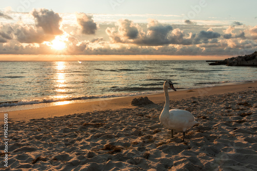 Fotobehang Zwaan Swan on the beach