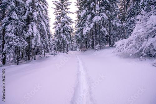 Foto op Canvas Purper Winter snowy forest
