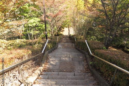 Tuinposter Tokio 青空の公園の風景7