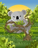 koala eating in tree