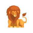 Powerful lion lying, wild predatory animal vector Illustration on a white background