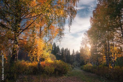 In de dag Weg in bos birch autumn alley in the evening