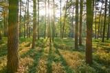 Wald mit Sonne - 196314483