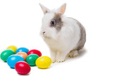 spotted easter bunny near colorful Easter eggs on white background