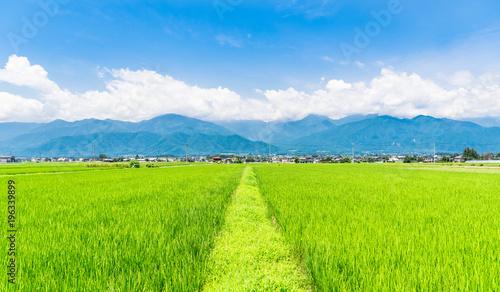 夏の信州 安曇野の田園風景