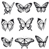 black butterfly, isolated on a white - 196343207