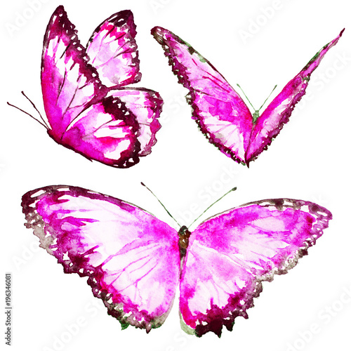 Fotobehang Vlinder beautiful pink butterfly,watercolor,isolated on a white
