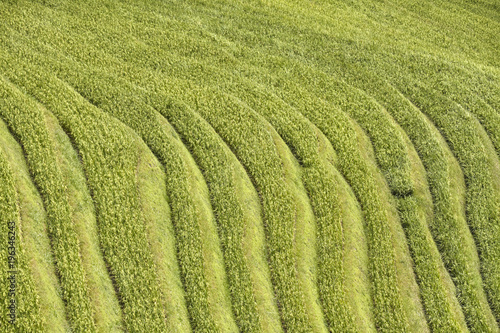 Deurstickers Rijstvelden Rice terraced fields from above, nature abstract background.