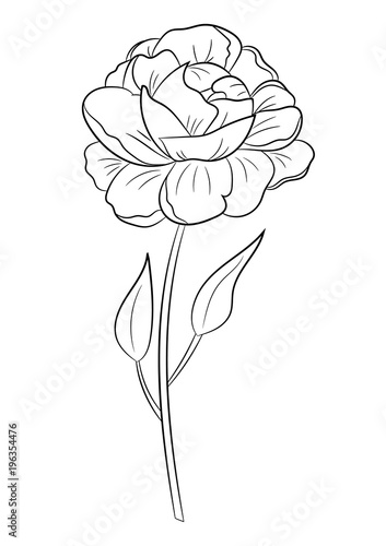hand drawn flower peony coloring page for children and adults