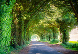 Scenic tunnel road in Southern England