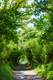 Scenic tunnel road in Southern England - 196370424