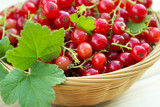 Red Fresh Currant In Little Basket