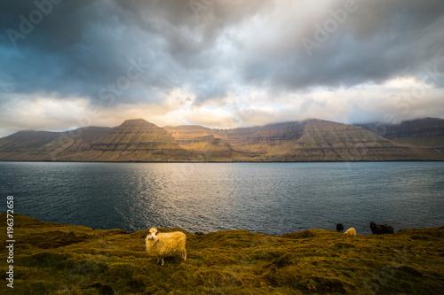Keuken foto achterwand Bleke violet Sheep Island, Faroe Islands in Kalsoy