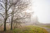 Trees along a foggy field in sunlight in winter - 196417200