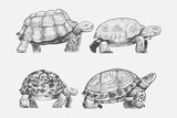 Illustration drawing style of turtle - 196430080