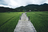 Rice field A wooden bridge on a rice field travel pai thailand