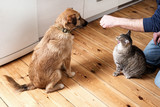 Dog and cat eating food together - 196457846