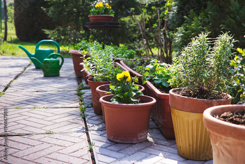 Many flower pots as a decoration in the garden at spring