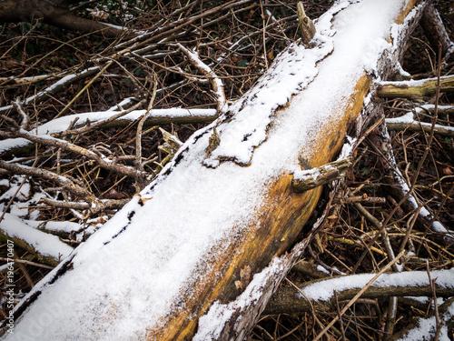 Baumstamm im Wald mit Schnee bedeckt