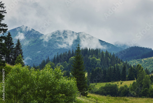 nature panorama green forest mountain fog cloud travel - 196484679