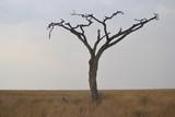 Savane pendant la saison sèche