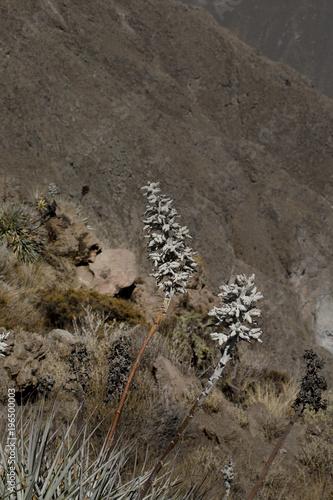 Sticker Colca Canyon Peru