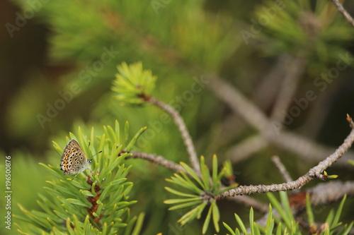 Fotobehang Vlinder Schmetterling auf Ast