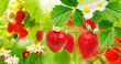 Summer garden berry - 196506858