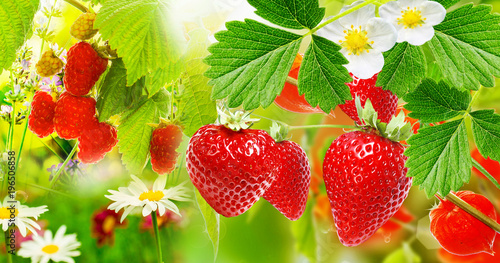 Canvas Natuur Summer garden berry