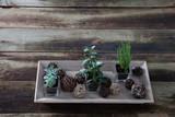 green succulent houseplants in horizontal tray for indoor flora garden